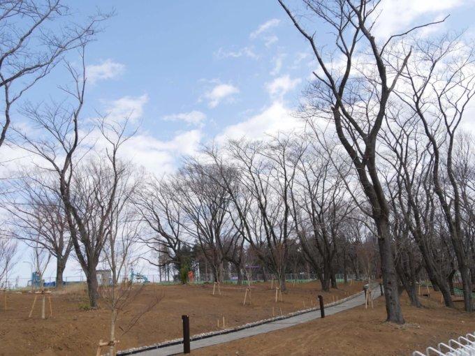 鶴間公園の水道道の向こうには散策路が出来ていました。