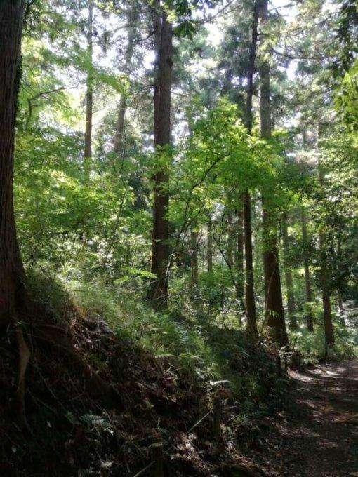 泉の森の森林