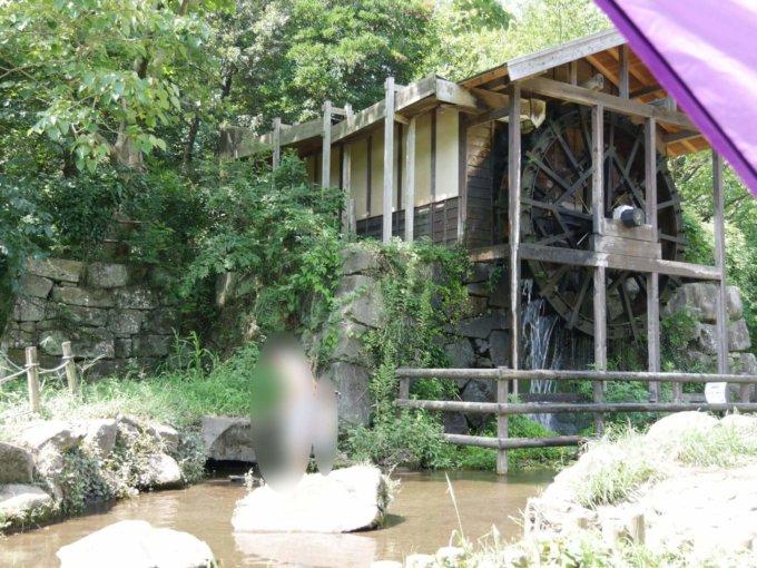 泉の森の遊びの小川