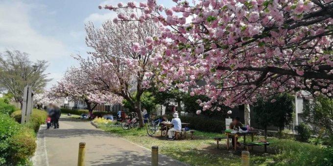 南町田駅徒歩圏のお花見スポット