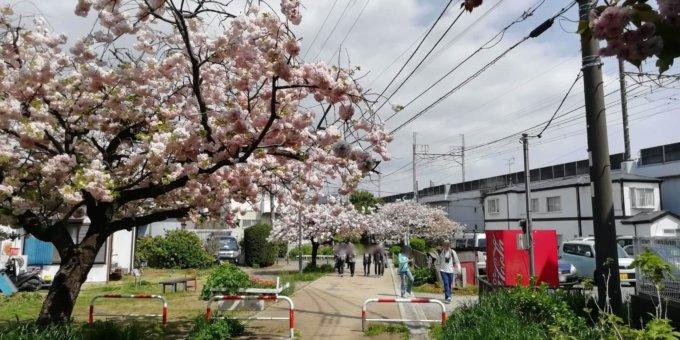 南町田駅徒歩圏のお花見スポットには遊具もあります