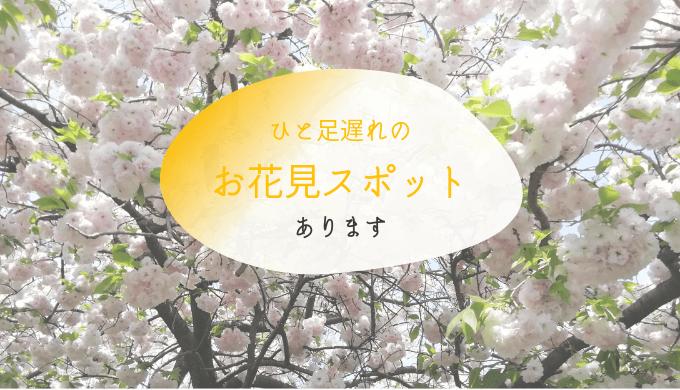 南町田周辺のお花見スポット