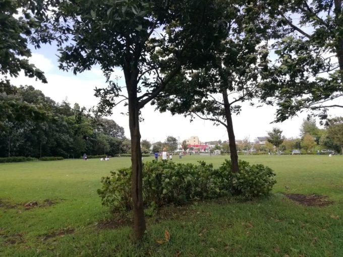 玄海田公園の広場
