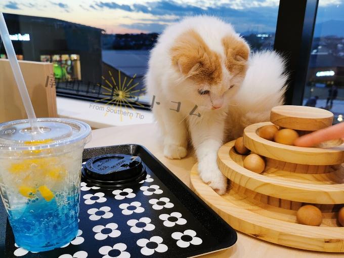 南町田グランベリーパークの猫カフェの猫