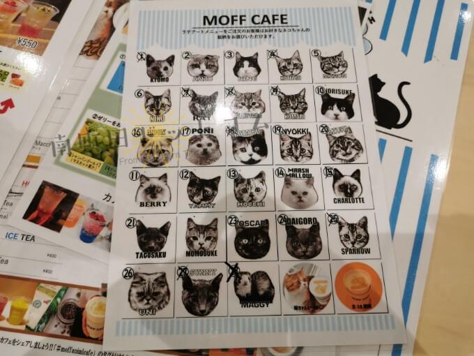 南町田グランベリーパークの猫カフェ